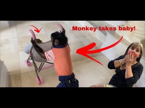 MONKEY TAKES BABY & THEN LEAVES HIM TO GO TO PUBLIX 🙀🙈 CRAZY SATURDAY VIDEO!