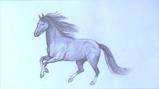 Уроки рисования. Как научиться рисовать лошадь карандашом(Скачайте видео урок