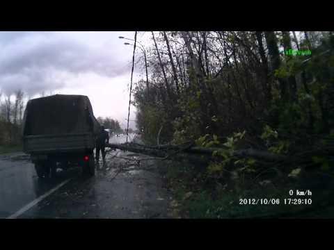 В метре от машины упало дерево
