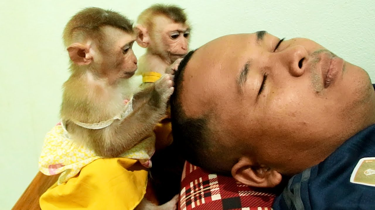 Monkey Baby Too Love Dad So Much, Lyly Boki Love Grooming Daddy New Hair Cut