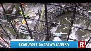 Evakuasi Tiga Satwa Langka di Waterpark