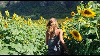 Hawaii Sunflowers and Bamboo Vlog