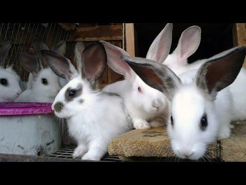 Болезни кроликов: симптомы и лечение. Важно знать!