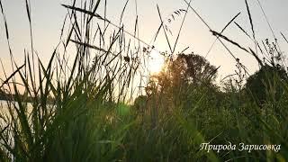 Природа  Музыка  Пение птиц  Релакс  Медитация  Звуки природы  Река  Слушать  Эмбиент