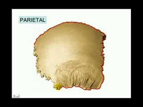 CRANEO 7 - PARIETAL - YouTube