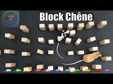 Block Chêne - MUS RABIDUS 🐭