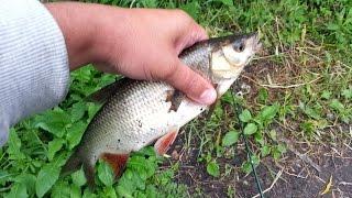 Рыбалка на поплавок, улов подъязки, чебаки  и окуни