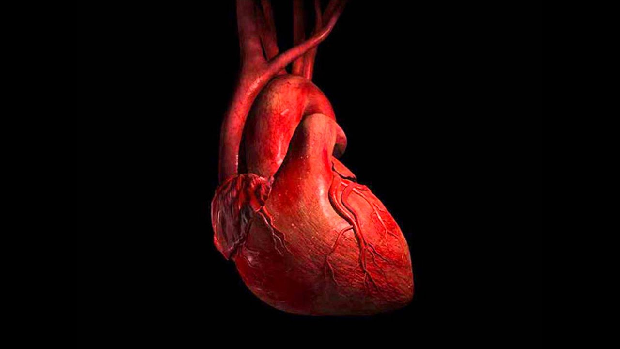 real human heart beating - photo #35