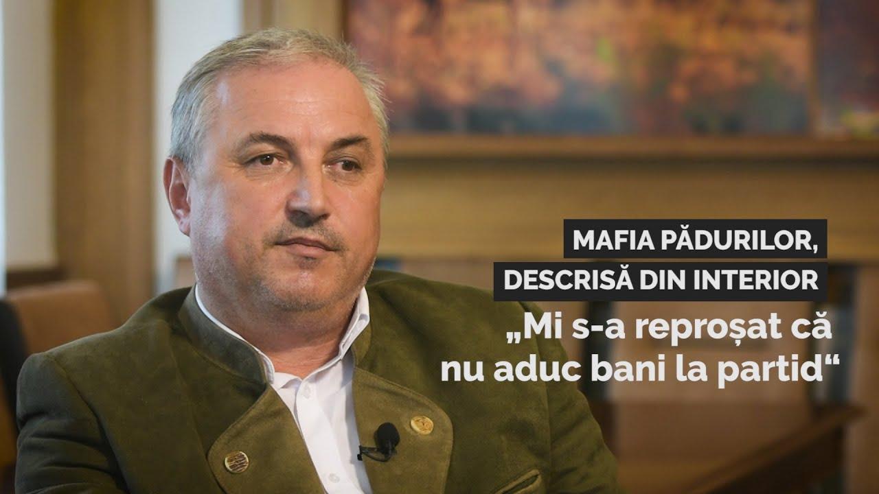 """Mafia pădurilor, descrisă din interior: """"Mi s-a reproșat că nu aduc bani la partid"""""""