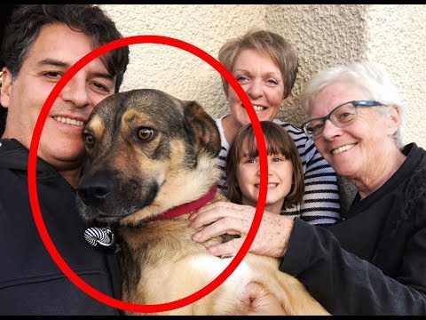 AMAZING DOG TRAVELS TO SCOTLAND TO FIND HIS FAMILY!