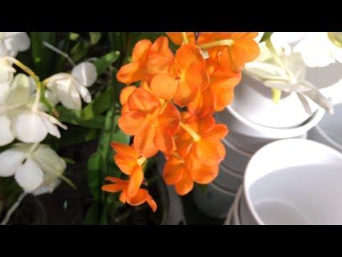 ОГРОМНЫЙ выбор орхидей в ОБИ 05.03.2018 г. Фаленопсис, Камбрия, Мильтассия, Мильтония, Дендробиум.