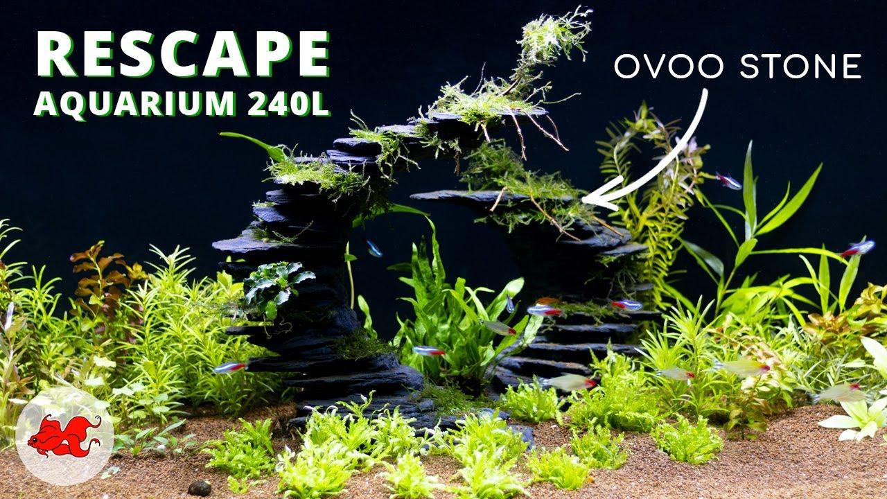 Mon aquarium 240l avec Ovoo stone