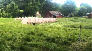 Pasture rotation of chickens and sheep