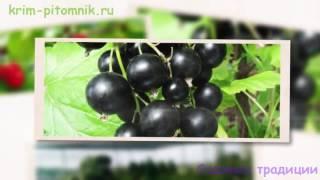 Где купить саженцы малины с доставкой(http://krim-pitomnik.ru/novosti/656-malina-s-dostavkoi Теперь вы знаете, где купить саженцы малины с доставкой по доступной стоимости., 2016-09-20T15:27:20.000Z)