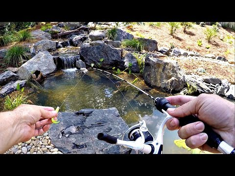 Micro Fishing for a New Pet Crappie!!