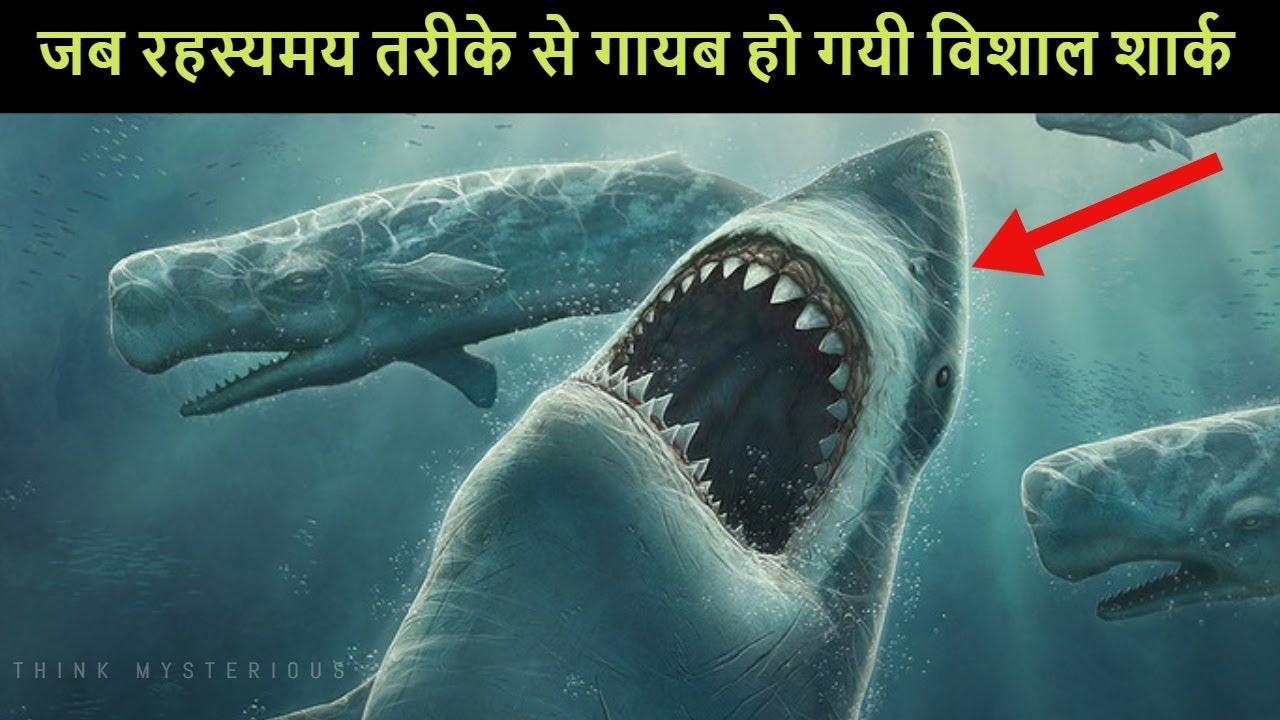 आखिर किसने खाया एक 9 फुट की शार्क को | 5 most mysterious events of sea