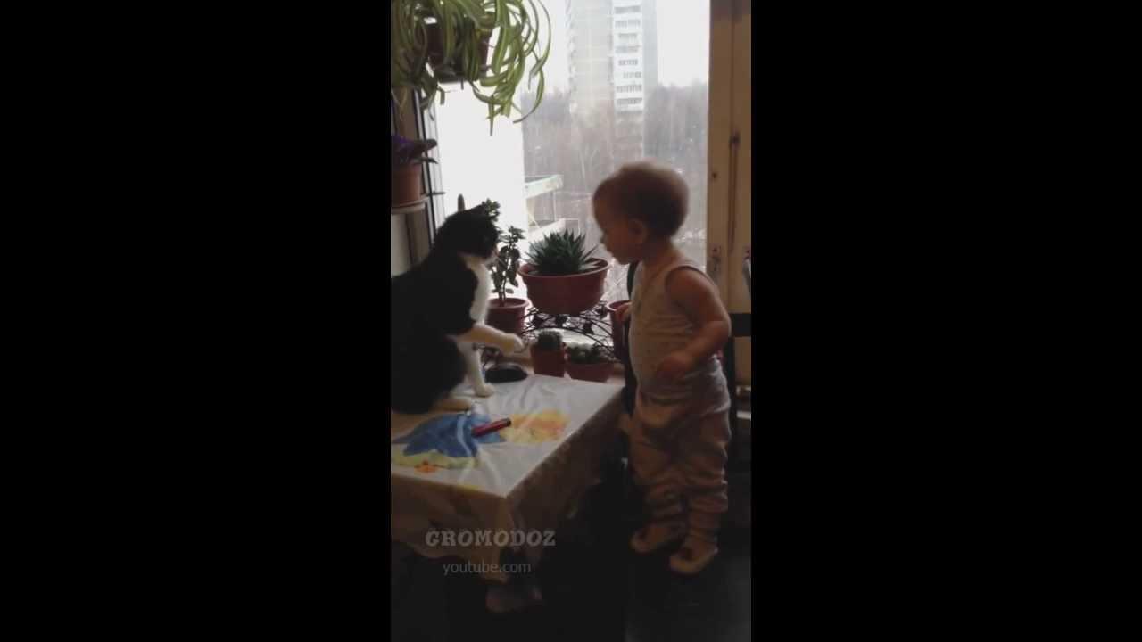 boxing baby and cat funny videos / смешное видео : бокс кота и  малыша