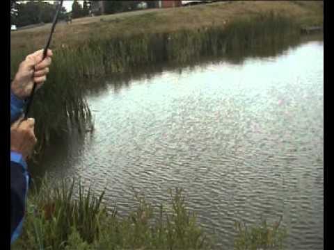 Trout Fishing At Lakeside Fishery .Ranskill.