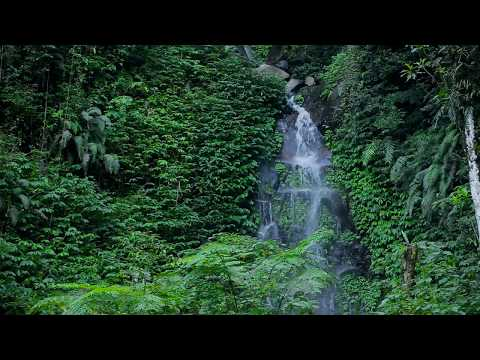 ☔ Rain Sound On Leaves - Relaxing Raindrops On Vegetation Ambience For Sleeping And Relaxation