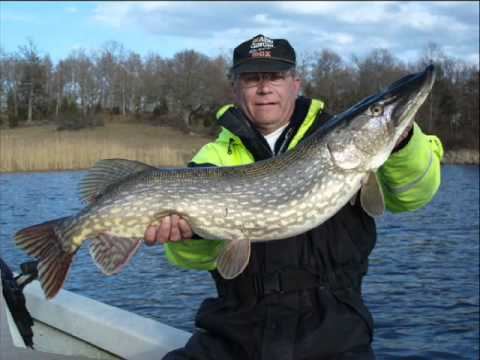 Big fish sweden fishing camps youtube for Swedish fish in sweden