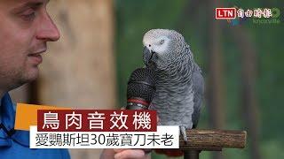 天才灰鸚鵡30歲寶刀未老 說學逗唱根本看不到車尾燈啦