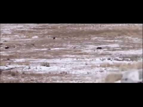 Монгол морьны гавьяа...
