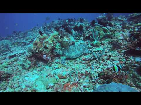 Diving: Gili Trawangan, Deep Turbo on 5.19.18