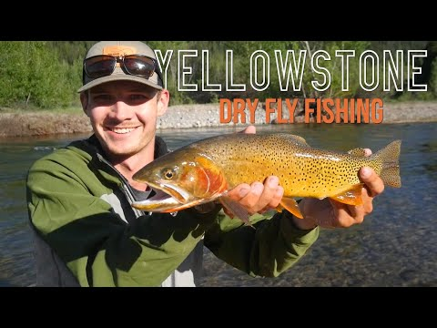Dry Flies on Small Streams - Fly Fishing Yellowstone (1 of 3)