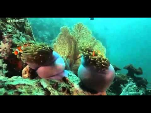 ☛☛ La vie agitée des poissons de l'océan ☚☚