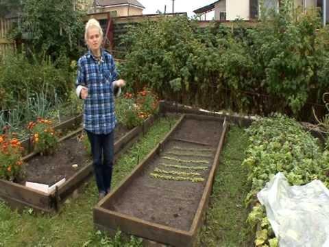 Как сеять морковь, чтобы не прореживать? Советы