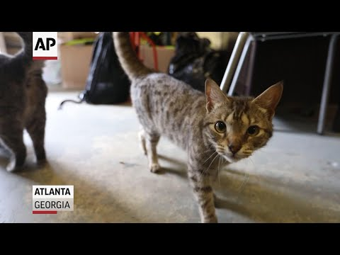 Program lends hand to low-income animal owners