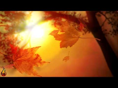 1 Hour Relaxing Music | Autumn Leaves | Instrumental Guitar, Piano, Drums ♫451