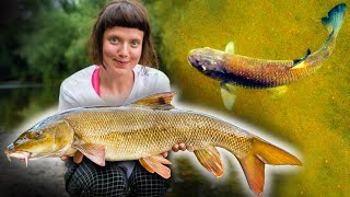 River Fishing - BIG FISH on the SURFACE!