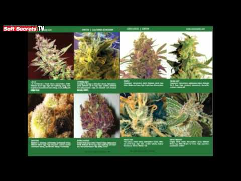 Soft Secrets TV 7 -  Cannabis as Medicine & A Grower's Bible