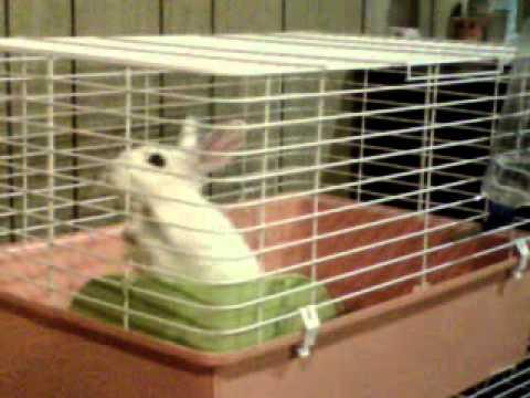 silly bunny
