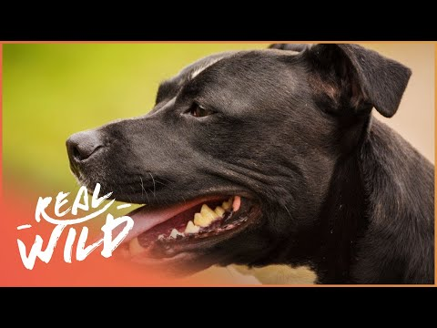 Dog's Day Out! | For The Love Of Dogs | Wild Things Documentary