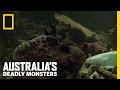 The World's Most Venomous Fish | Australia's Deadly Monsters