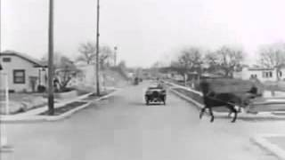 Tarihte Görüntülenen ilk Kaza en eski kaza