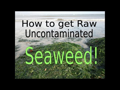 How To Get Raw Uncontaminated Seaweed