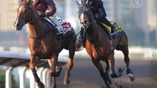 Конные скачки в Гонконге притягивают зрителей (новости)
