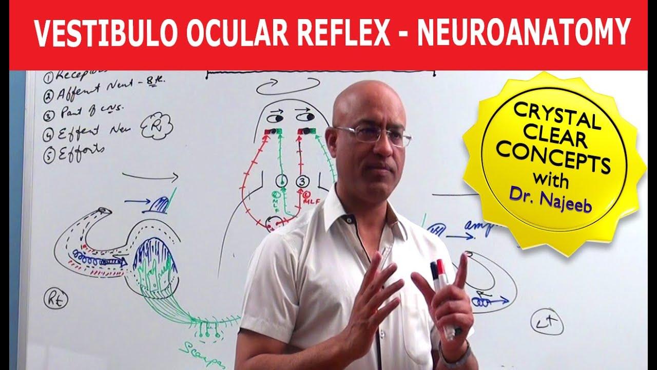 Vestibulo Ocular Reflex - Neuroanatomy