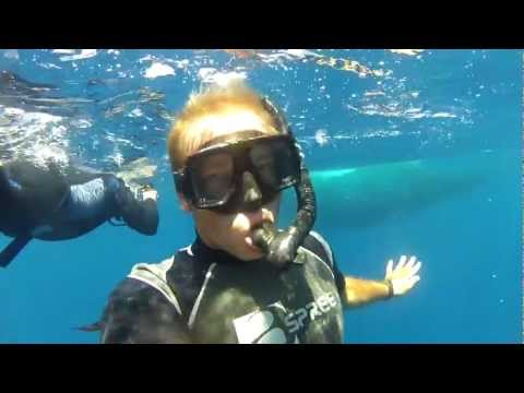 Snorkeling with Humpback Whales in Tonga (Ha'apai) with Fins 'n' Flukes Sept. 2012 Gopro HD 720p