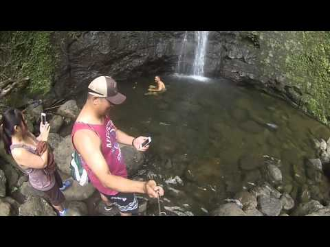 Manoa Falls Trail 2014 05 17