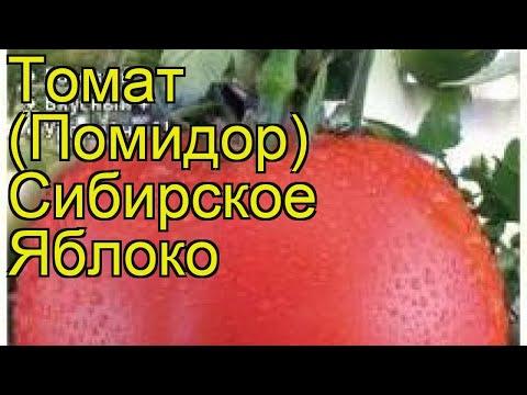 Томат обыкновенный Сибирское Яблоко. Краткий обзор, описание характеристик, где купить семена