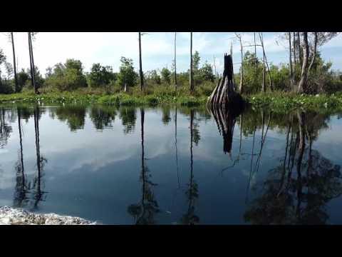 Billy's Lake (Okefenokee Swamp)