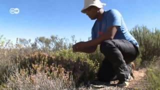 Frenar el desierto | Ideas globales