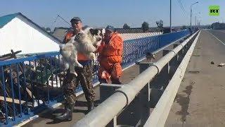 В иркутском Тулуне МЧС и волонтёры спасают животных из зоны наводнения