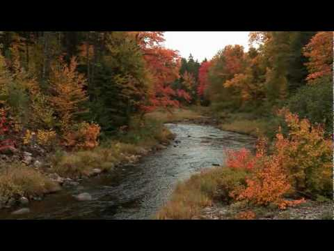 A Stay in the Maine Wilderness