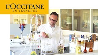 Divine Harmony - Supreme Synergy Youth Care | L'Occitane