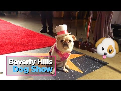 beverly hills dog show 2020